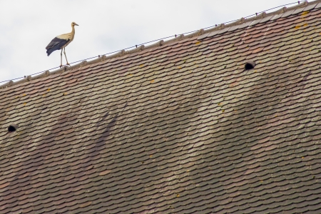 stork on a roof