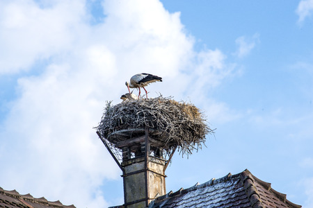 stork in a nest