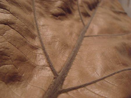 macro leaf texture brown dry