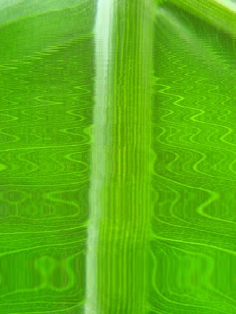 green wave lines