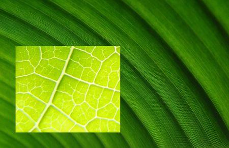 macro shots from leaf veins