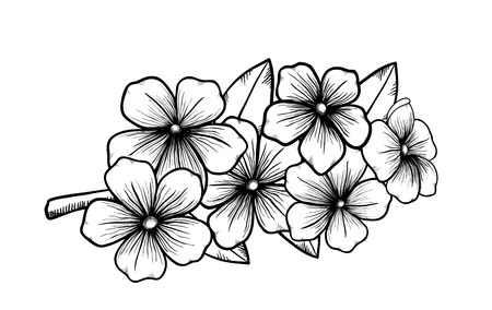 branch of a blossoming tree in graphic black white style, drawing by hand  Symbol of spring