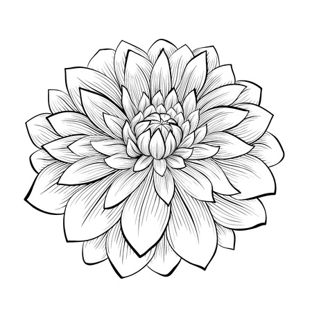 Illustration pour beautiful monochrome black and white dahlia flower isolated on white background. Hand-drawn contour lines and strokes. - image libre de droit