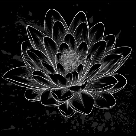 Beautiful monochrome black and white lotus flower