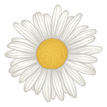 Illustration pour beautiful white daisy flower isolated. for greeting cards and invitations of wedding, birthday, mother's day and other seasonal holiday - image libre de droit