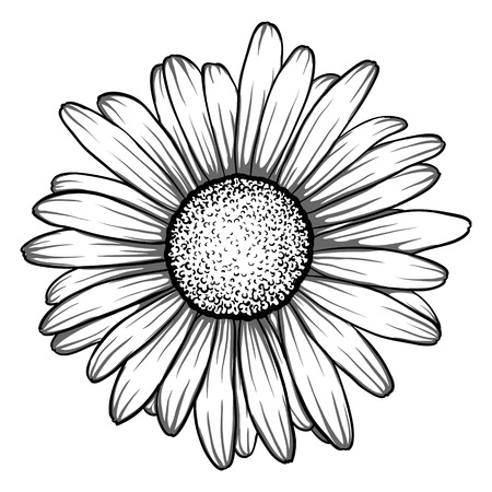 Illustration pour beautiful monochrome, black and white daisy flower isolated. for greeting cards and invitations of the wedding, birthday, Valentine's Day, mother's day and other seasonal holiday - image libre de droit