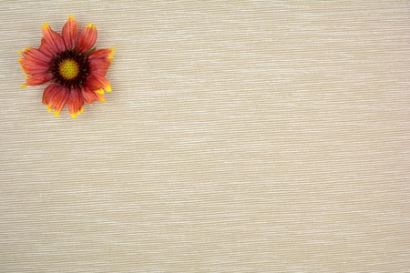 Bloom on light brown background for texture