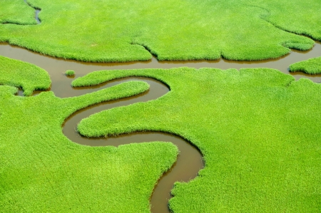 Aerial view of lush coastal wetlands の写真素材
