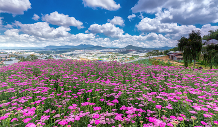 Photo pour Highland Park Dalat Flower on a sunny morning, hilltop village Immense flower field far away from the high which areas, cheerful and wanted this flower garden is always watching. - image libre de droit
