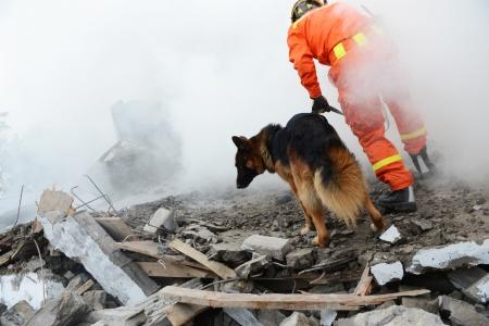 捜索救難、救助犬の助けを借りて...