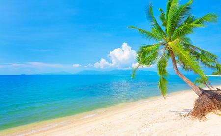 beach and coconut tree