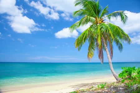 Photo pour tropical beach with coconut palm - image libre de droit
