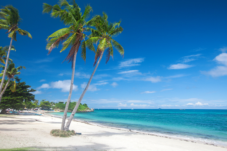 Photo for Beach and coconut palm tree - Royalty Free Image