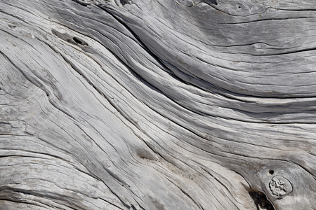 Foto de Dead tree texture - Imagen libre de derechos