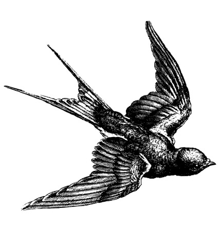 Illustration pour Vector hand drawing sketch of a flying bird - image libre de droit