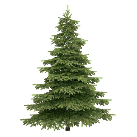 Spruce tree isolated on white.