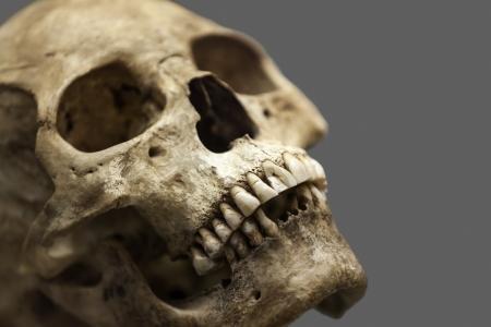 Human anatomy - ancient people skull bone