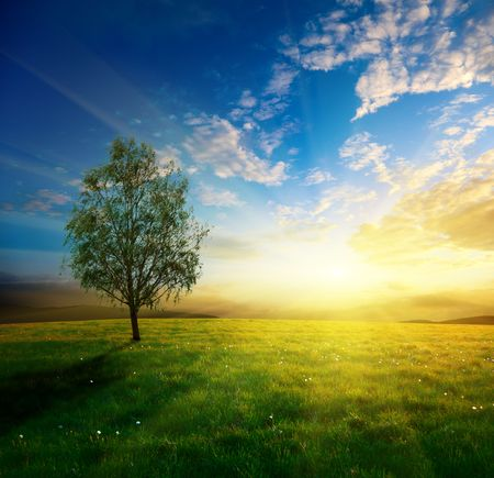 Photo for field of spring grass and sunset - Royalty Free Image