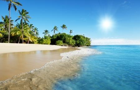 caribbean sea and palms