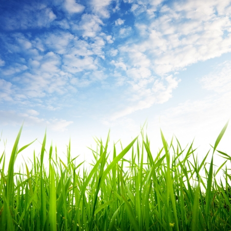 Photo for grass and cloudy sky - Royalty Free Image