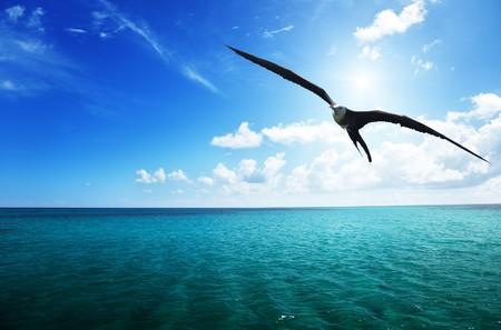 albatross and caribbean sea