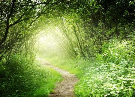 Foto de way in deep forest - Imagen libre de derechos
