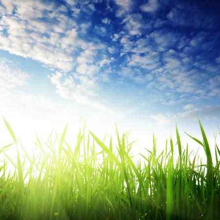 Photo pour grass and sunset - image libre de droit