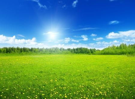 Foto de field of spring flowers and perfect sky - Imagen libre de derechos