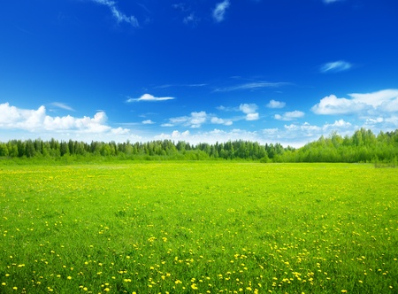 Foto per field of spring flowers and perfect sky - Immagine Royalty Free