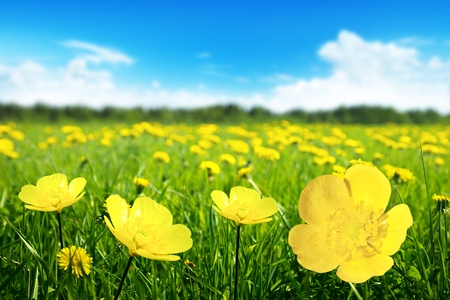 Foto de Field of spring flowers and perfect sunny day - Imagen libre de derechos