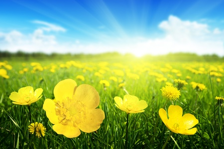 Photo for Field of spring flowers and perfect sunny day - Royalty Free Image