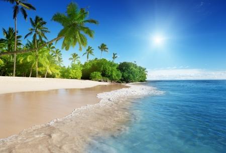 Foto de caribbean sea and palms - Imagen libre de derechos