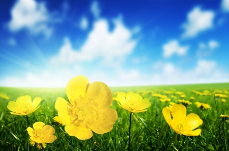 Photo pour Field of spring flowers and perfect sunny day - image libre de droit