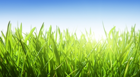 Photo for green grass and blue sky - Royalty Free Image