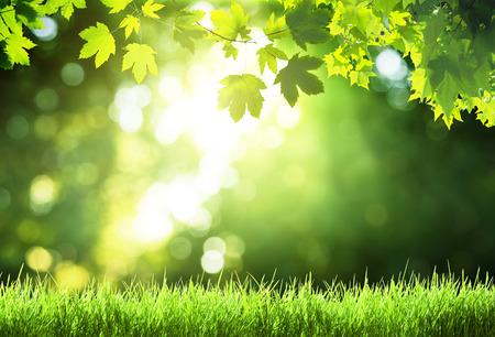 Photo pour sunny day in forest - image libre de droit