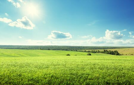 Photo for field of spring grass and perfect sky - Royalty Free Image