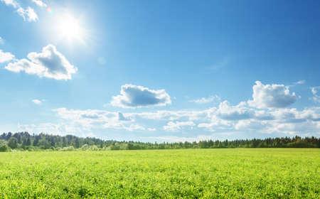 Photo pour field of spring grass and perfect sky - image libre de droit