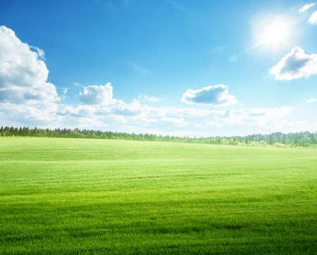 Photo pour field of grass and perfect blue sky - image libre de droit