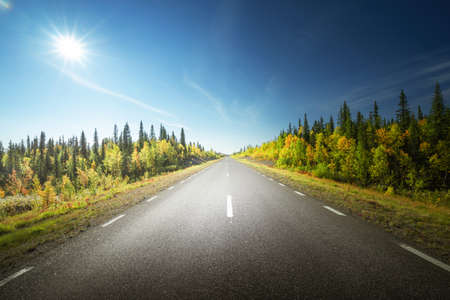 Photo for Road in autumn forest, Sweden - Royalty Free Image