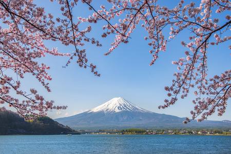 Photo pour Fuji Mountain and Pink Sakura Branches at Kawaguchiko Lake, Japan - image libre de droit