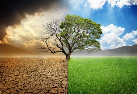 Foto de Dead and alive tree in a split of crack wasted land and green meodow field a concept of climate change and global warming - Imagen libre de derechos