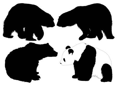 Bear Silhouette on white backgroundのイラスト素材