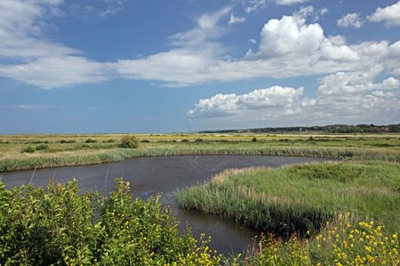 Coastal salt marsh