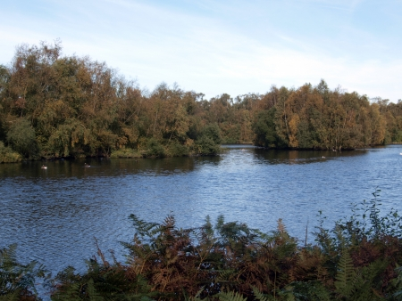 Burnham's Mere is  a large expanse of water 200 meters from Holme fen posts, it was created by the commercial cutting of peat within the reserve, this  has led to the creation of large areas of open water that support birds, dragonflies and marsh plants s