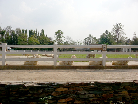 The arrangement of the sheep on the farm
