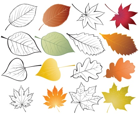Set of leaves. Color and outline illustrationsのイラスト素材
