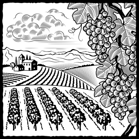 Vineyard landscape black and whiteのイラスト素材