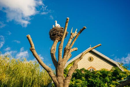Artificial copies that accurately imitate white storks, a large nest mounted on a pole and twisted from tree branches.