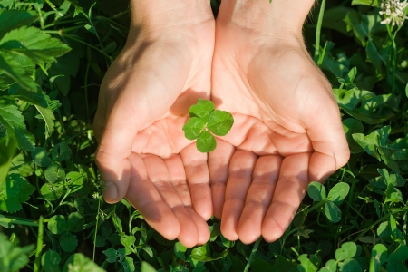 Female hand holding a four leaf clover on the ground