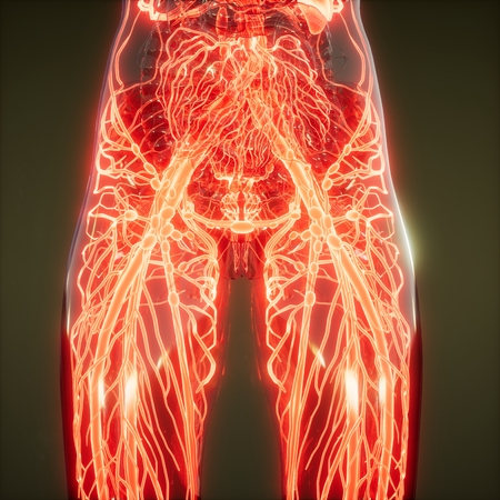 Photo for science anatomy scan of human blood vessels - Royalty Free Image